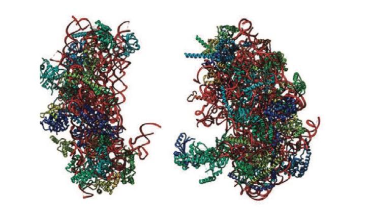 HPE – cryo-em structure of plasmodium falciparum 80S ribosome
